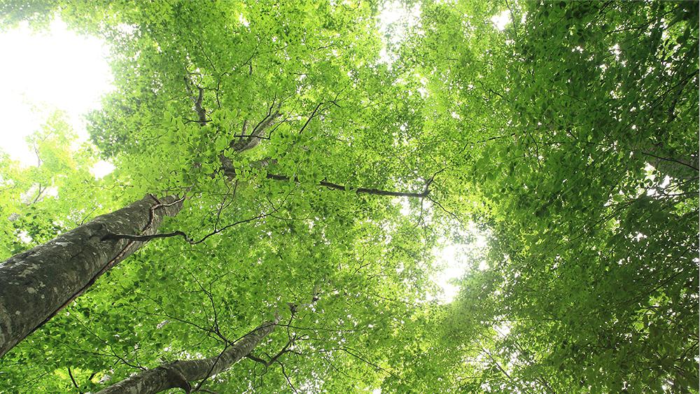 森林セラピーの写真