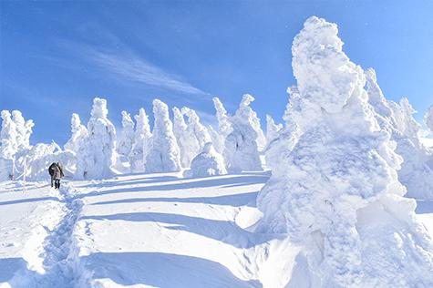 樹氷鑑賞の写真